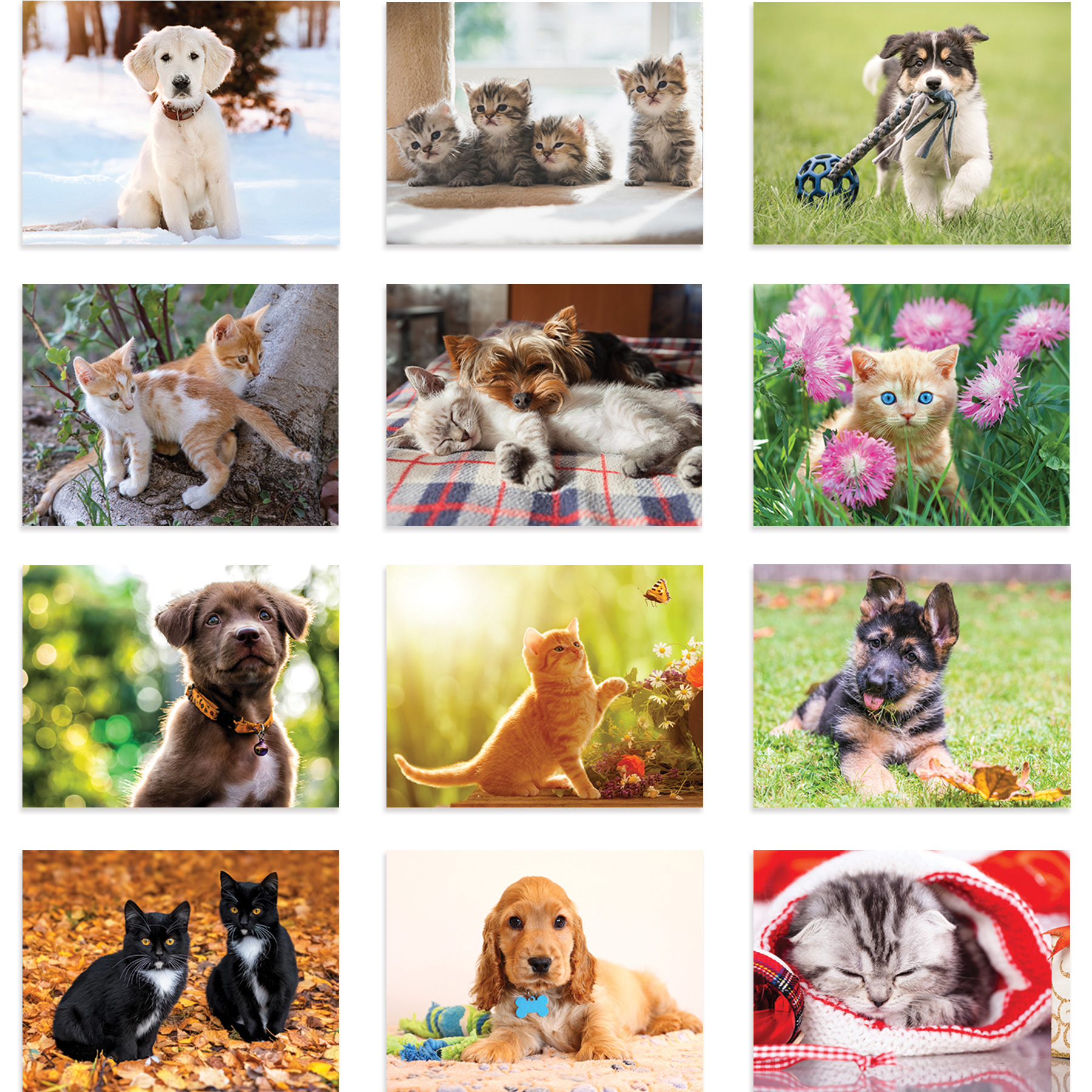 Custom Imprinted Calendar - Puppies and Kittens #2101